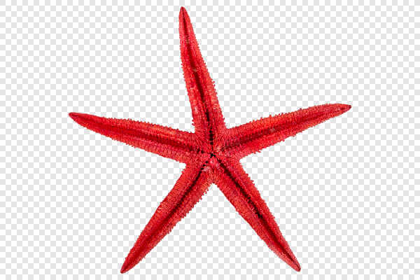 Red starfish — preview