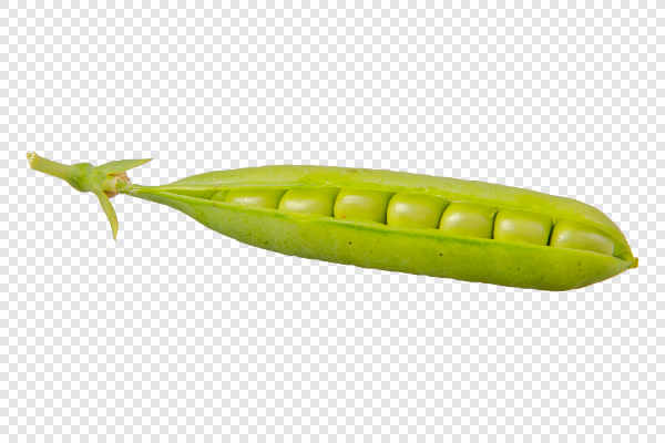 Green pea (Pisum sativum)... — preview