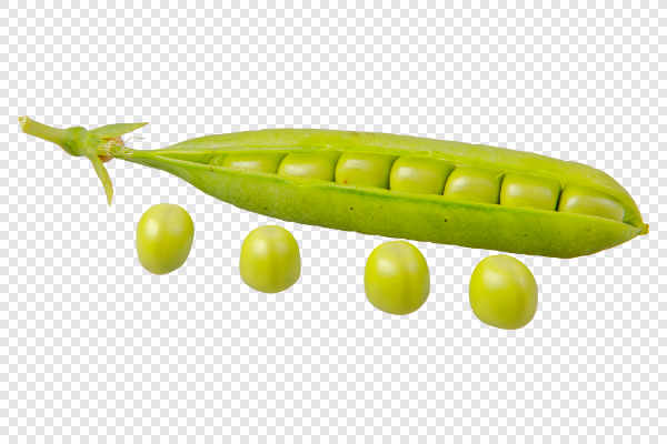 Green pea (Pisum sativum) — preview