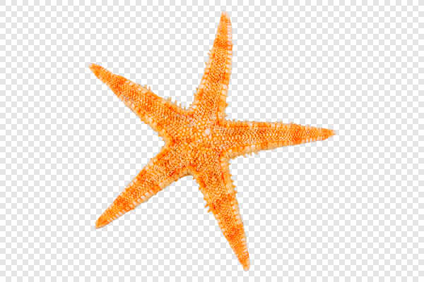 Orange starfish — preview