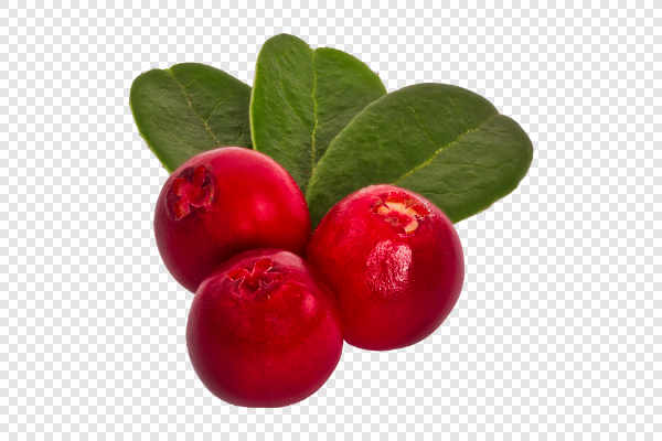 Cranberries with leafs — preview