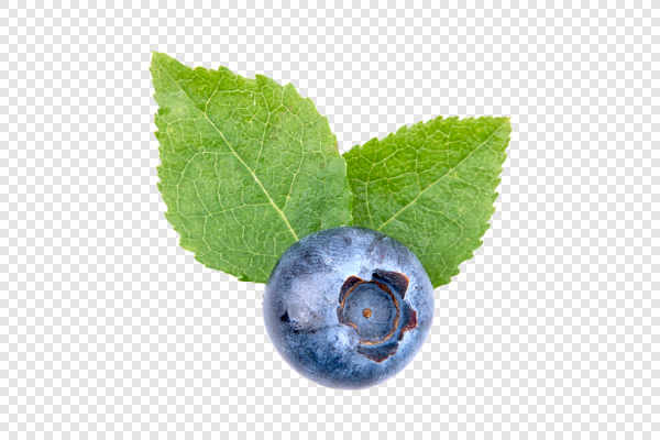 Blueberry with leafs — preview