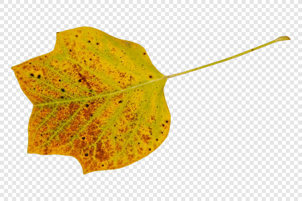 Colored leaf — preview