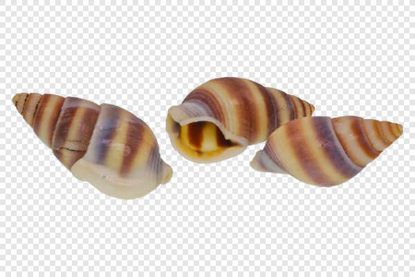 Snail shells — preview