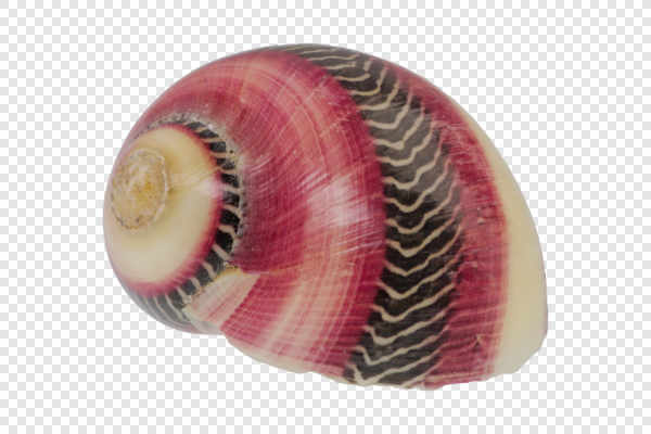 Snail shell — preview